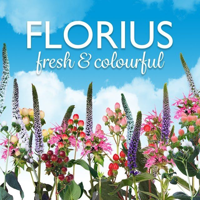 Florius fresh and colourful